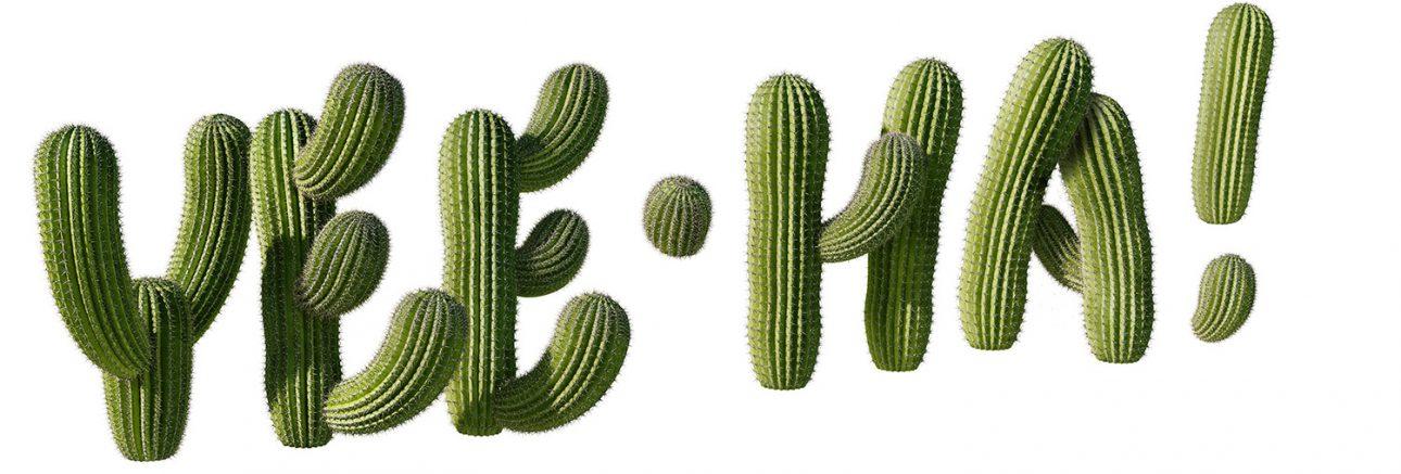 McDs – cactus_for _portfolio a